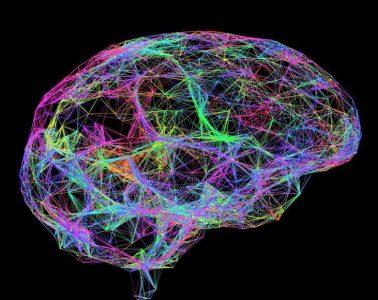 Nuevos estudios revelan que la obesidad afecta la memoria y el aprendizaje