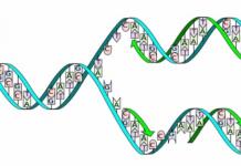 ARN mensajero