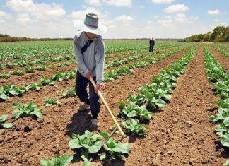 Cómo la agricultura cambió nuestra forma de hablar