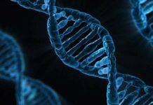 La pobreza deja huella en nuestros genes
